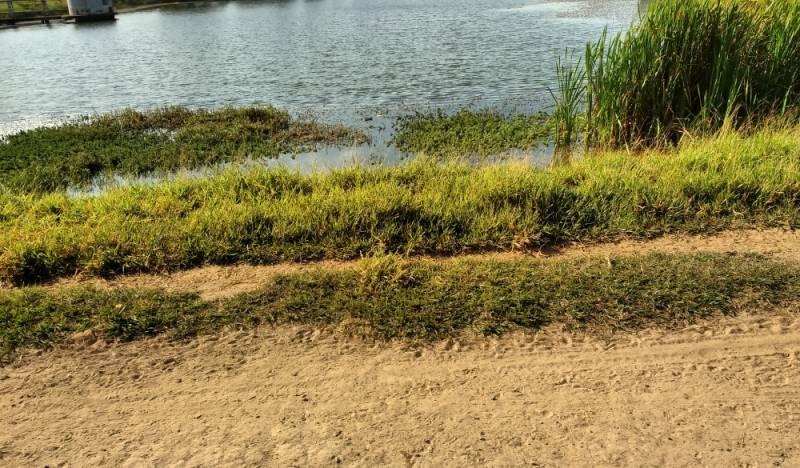 Análise de Parâmetros e Controle de Qualidade da água Parque São Rafael - Coleta de água de Rio